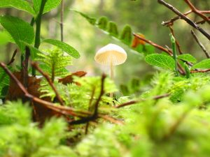 a small mushroom in a forest